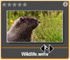 Avid Studio image006 Prohlížeč