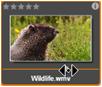 Avid Studio image006 Browseren