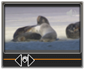 Avid Studio image002 Montasjeredigereren