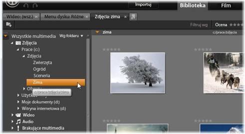 Avid Studio image001 Drzewo zasobów