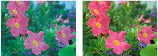 CorelDRAW raw white bal incorr Adjusting the color and tone of raw camera files