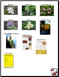 PaperPort combine into thumbnail Combiner des objets