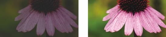 Photo Paint corr bright contrast Utilisation du laboratoire de réglage d'images