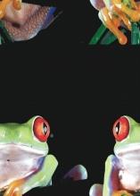 Photo Paint fx distort offeset Galerie des types d'effets spéciaux.