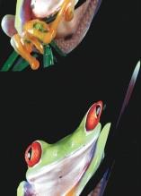 Photo Paint fx distort shear Galerie des types d'effets spéciaux.