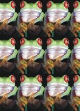 Photo Paint fx distort tile Galerie des types d'effets spéciaux.