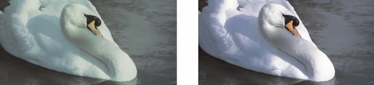 Photo Paint corr color cast Utilizzo del Laboratorio regola immagine