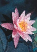 Photo Paint fx art pastels Galleria di effetti speciali
