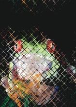 Photo Paint fx distort displace Galleria di effetti speciali