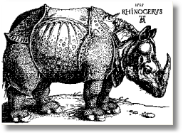 Rhinoceros durer4 The Rhino Legend