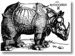 Rhinoceros durer4 Rhino 的由来