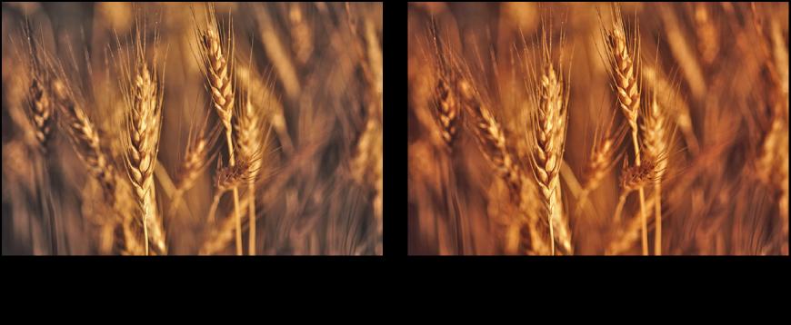 Bild vor und nach der Anwendung der automatischen Verbesserung