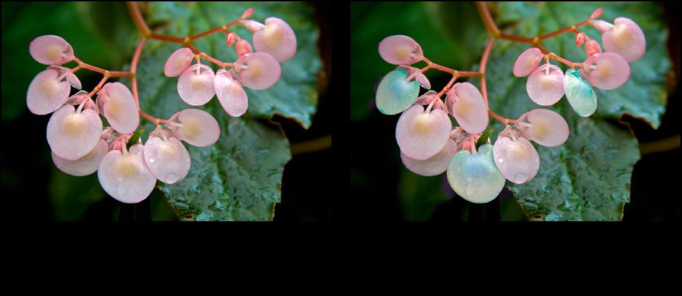 """Abbildung. Bild vor und nach der Anwendung der Quick-Brush-Anpassung """"Farbton""""."""
