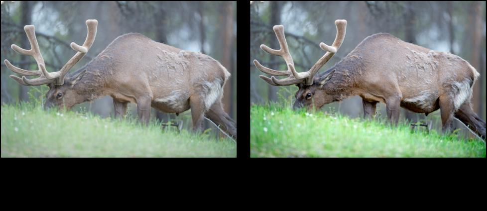 """Abbildung. Bild vor und nach der Anwendung der Quick-Brush-Anpassung """"Kontrast""""."""