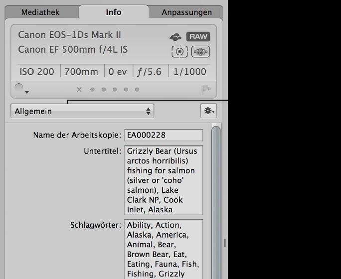 """Abbildung. Informationsfenster """"Info"""" mit Einblendmenü """"Metadaten-Ansicht"""" und Feld """"Schlagwörter""""."""