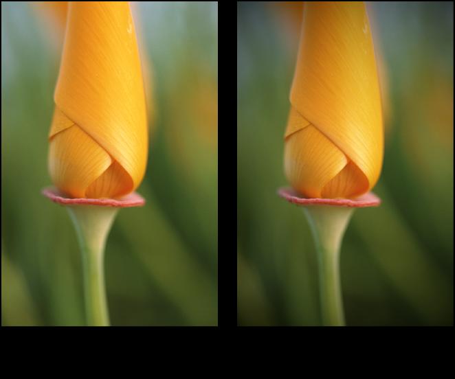 """Abbildung. Bild vor und nach der Anwendung der Anpassung """"Vignette"""" des Typs """"Belichtung""""."""