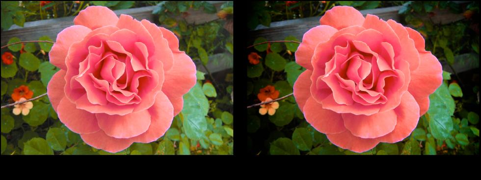 """Abbildung. Bild vor und nach der Anwendung der Anpassung """"Vignette"""" des Typs """"Gamma""""."""