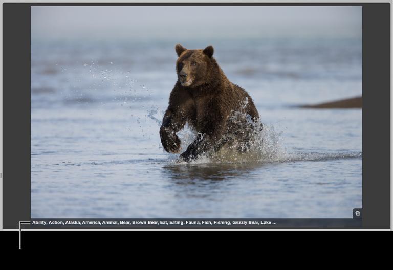 Abbildung. Viewer mit den Metadaten eines Bilds, die unten im Bild angezeigt werden.