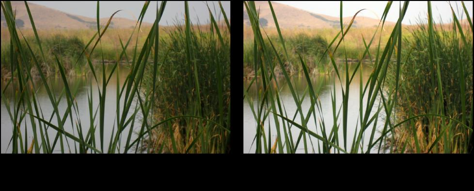 Figure. Image avant et après un ajustement Courbes automatiques séparées.