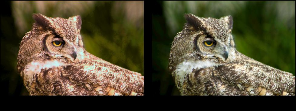 Figure. Image avant et après application d'un ajustement de la courbe tonale rouge.