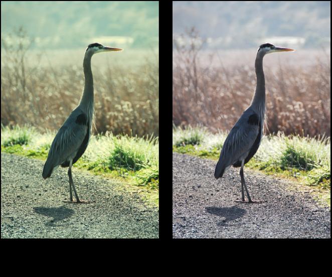 Figure. Image avant et après application d'un ajustement de la courbe tonale verte.