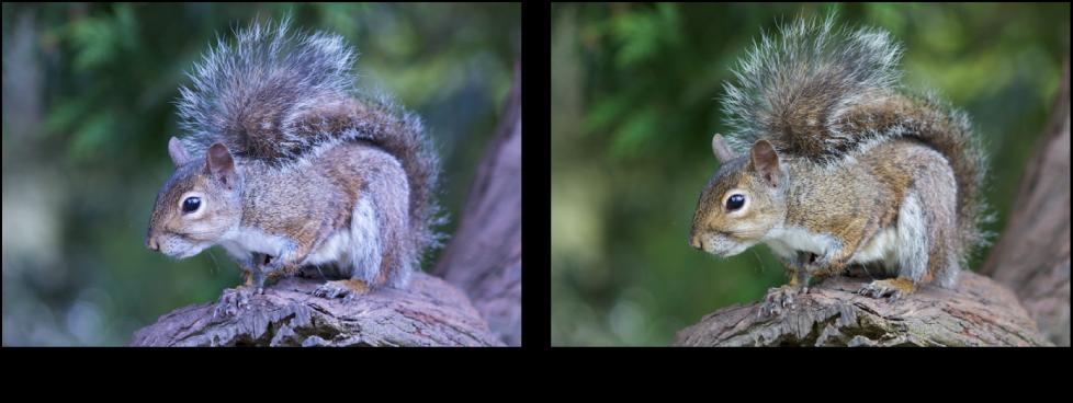 Figure. Image avant et après application d'un ajustement de la courbe tonale bleue.
