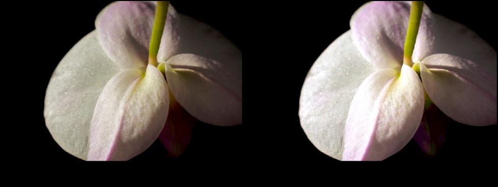 Figure. Image avant et après application d'un ajustement de courbes Point blanc.