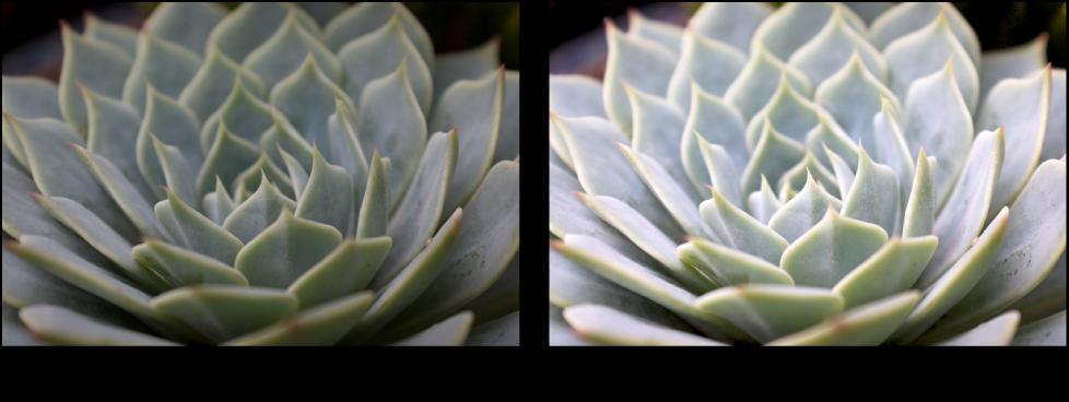 Figure. Image avant et après application d'un ajustement de courbes Point gris.