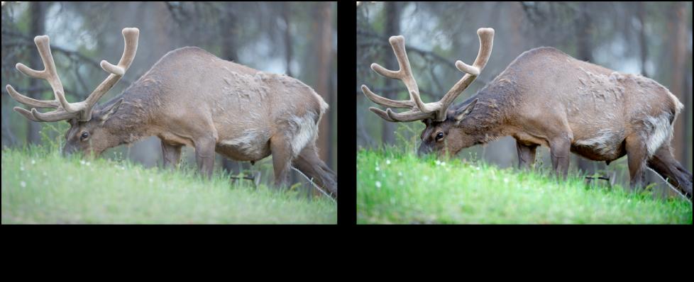 Figure. Image avant et après un ajustement Contraste de Pinceau rapide.