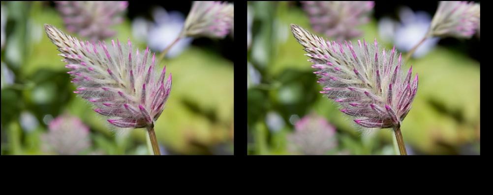 Figure. Image avant et après un ajustement Définition de Pinceau rapide.