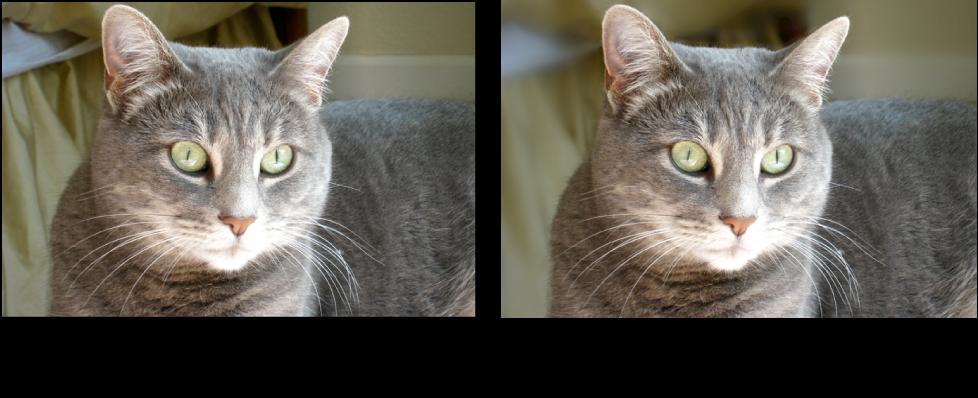 Figure. Image avant et après un ajustement Flou de Pinceau rapide.