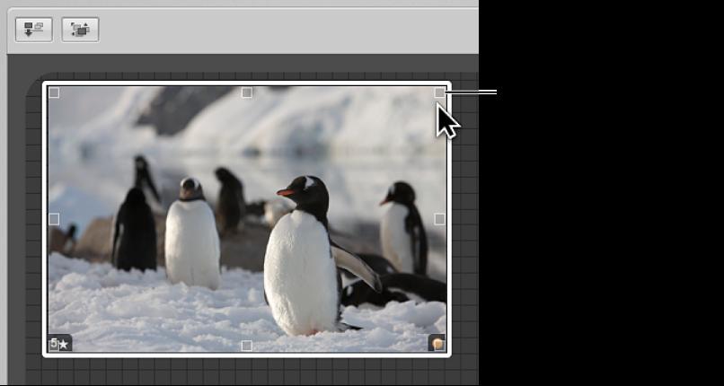 Figure. Table lumineuse affichant une poignée de redimensionnement qui peut être glissée pour modifier la taille de l'image.