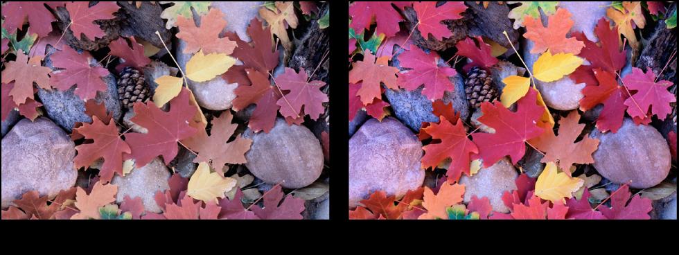 Figure. Image avant et après application d'un ajustement Saturation.