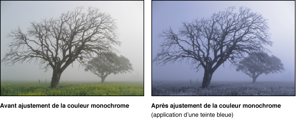 Figure. Image avant et après application d'un ajustement Couleur monochrome.