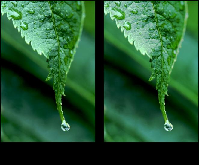 Figure. Image avant et après application d'un ajustement Niveaux de gris.