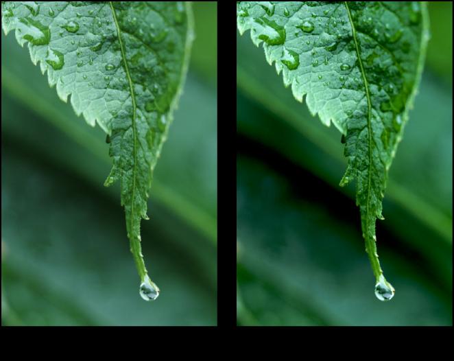 Figure. Image avant et après application d'un ajustement Niveaux.