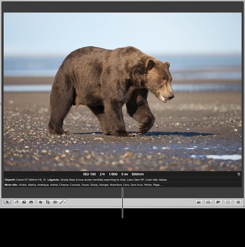 Figure. Visualiseur affichant une image avec des métadonnées dans la présentation de superpositions de métadonnées étendue.