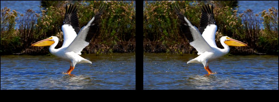 図。 「反転」調整の前と後のイメージ。