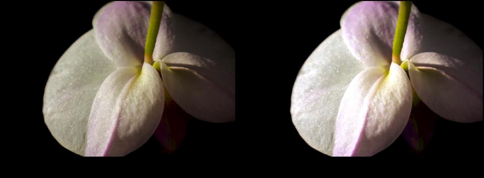 図。 「ホワイトポイント」を使った「カーブ」調整の前と後のイメージ。
