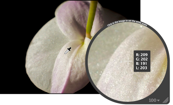 図。 イメージの最も明るいピクセルを拡大して表示しているルーペ。