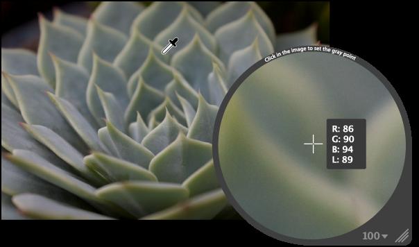 図。 イメージのミディアムグレイの色のピクセルを拡大して表示しているルーペ。