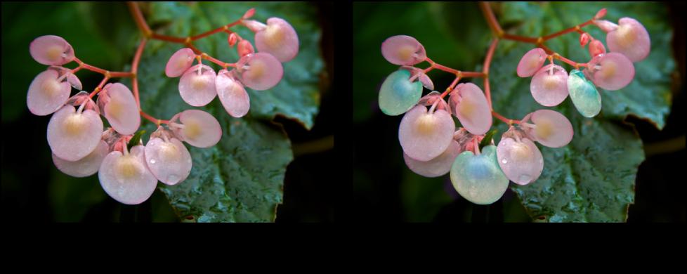 図。 「色合い」クイックブラシ調整の前と後のイメージ。