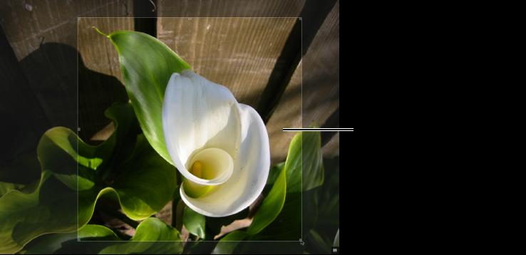 図。 イメージのトリミングされた領域の上に「トリミング」オーバーレイが表示されているイメージ。