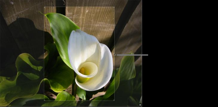 図。 「トリミング」オーバーレイの右側にサイズ変更ハンドルが表示されているイメージ。