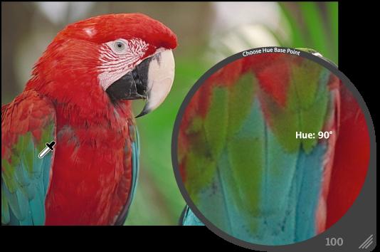图。 放大镜放大显示图像中的绿色区域。