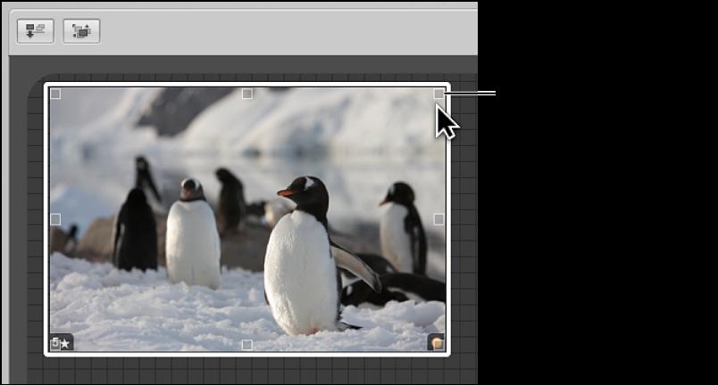 图。 看片台显示可以拖移来更改图像大小的大小调整控制柄。