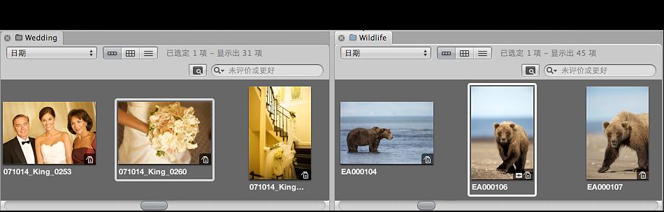 """图。 浏览器拆分成多个面板,并显示在""""资料库""""检查器中选择的两个项的图像。"""