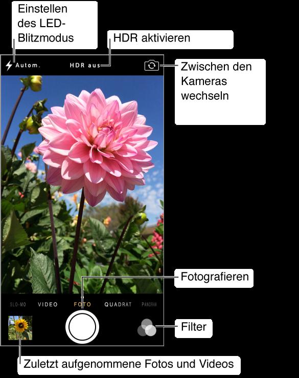 """Kamera im Fotomodus. Streichen Sie nach links oder nach rechts über den Bildschirm, um zwischen den Modi umzuschalten. Oben werden die Tasten """"Blitz"""", """"HDR"""" und """"Kamera wechseln"""" angezeigt. Tippen Sie auf die Miniatur links unten, um die Fotos und Videos anzuzeigen, die Sie aufgenommen haben. Der Auslöser befindet sich unten in der Mitte des Bildschirms. Rechts unten befindet sich die Taste """"Filter""""."""