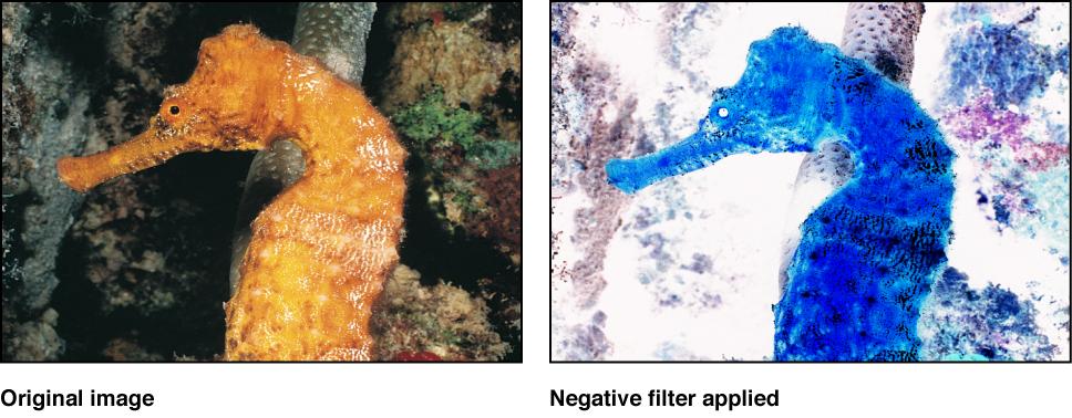 """Canvas mit dem Effekt des Filters """"Negativ"""""""