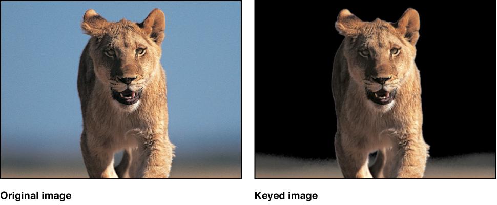 Vergleich eines Clips vor und nach dem Keying im Canvas.